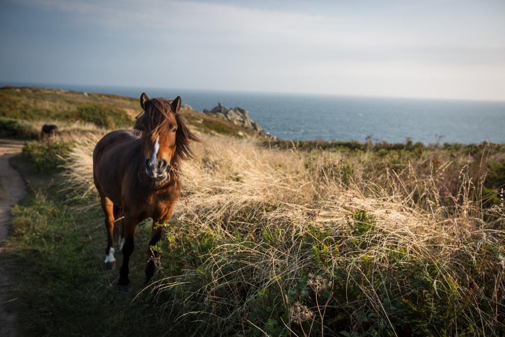 Neu im Portfolio: Cornwall